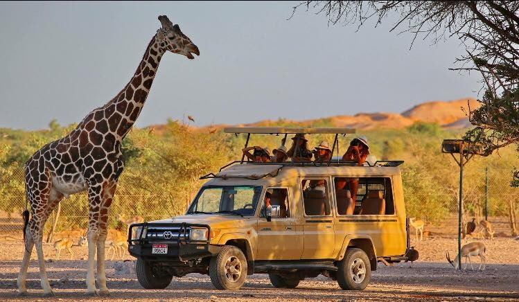 Safari a Sir Bani Yas Island